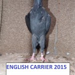 carrier20151